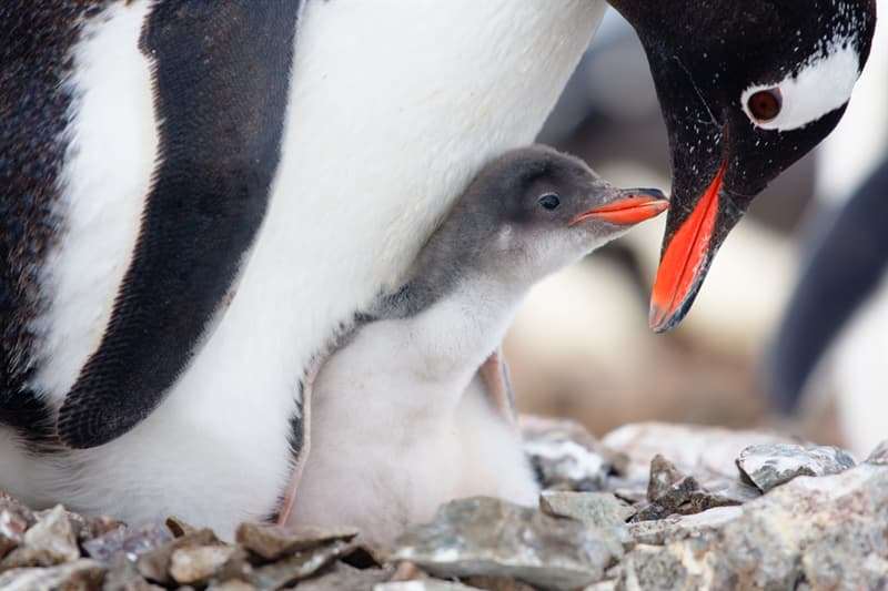 Geography Story: 15 amazing photos of graceful penguins #15