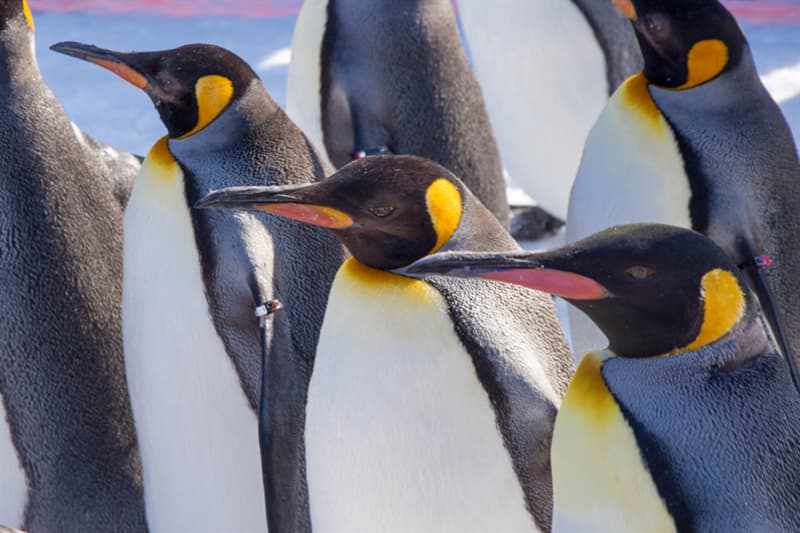 Geography Story: #2 Emperor Penguins