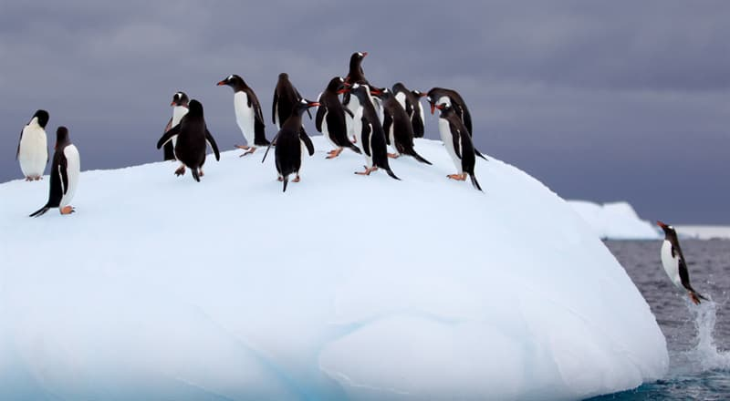 Geography Story: #9 Emperor Penguins