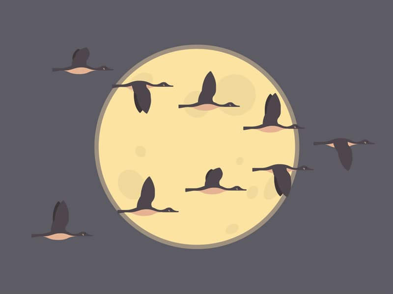 Nature Story: Why do Canadian geese fly at night?