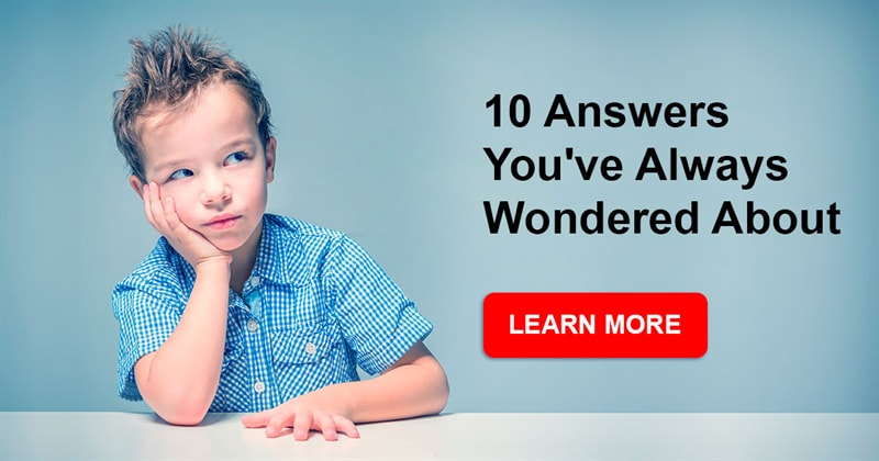 Story: 10 answers you've always wondered about