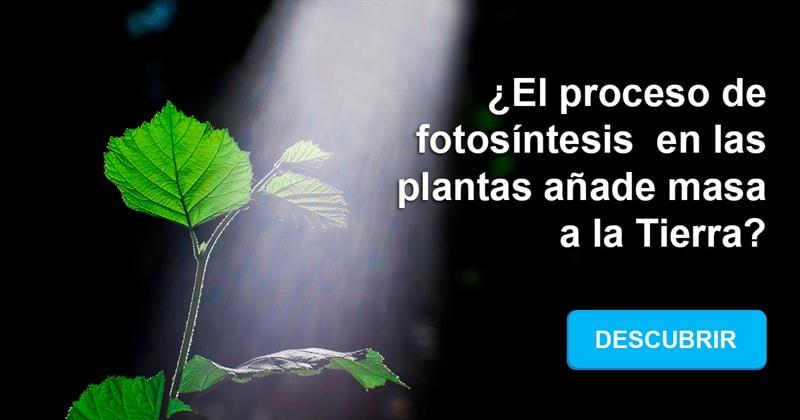 Сiencia Historia: ¿El proceso de fotosíntesis en las plantas añade masa a la Tierra?