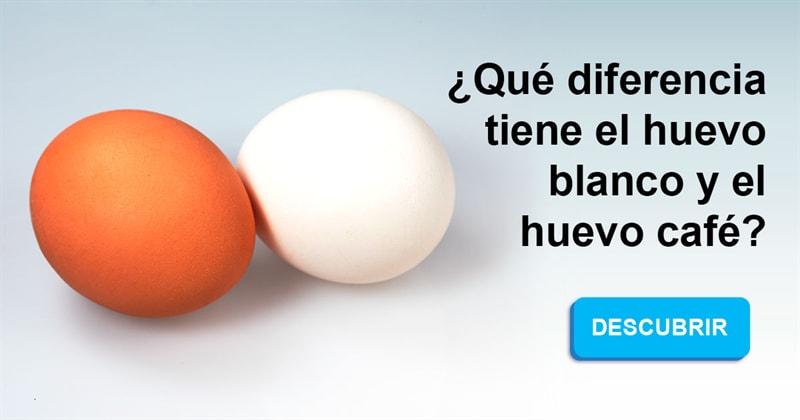 Naturaleza Historia: ¿Qué diferencia tiene el huevo blanco y el huevo café?
