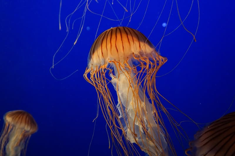Geography Story: #5 Jellyfish have no heart, no bones and no brain
