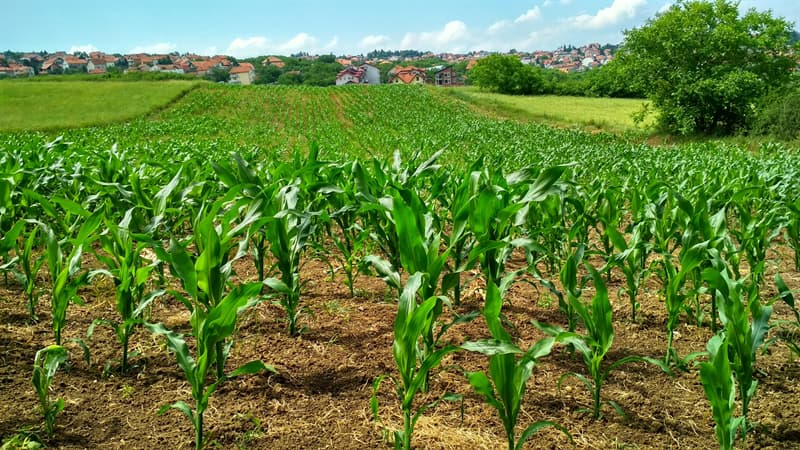 Geography Story: #7 Corn is grown on every continent on Earth except Antarctica