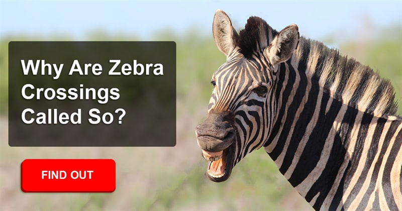 History Story: Why do you think zebra crossings are called that?