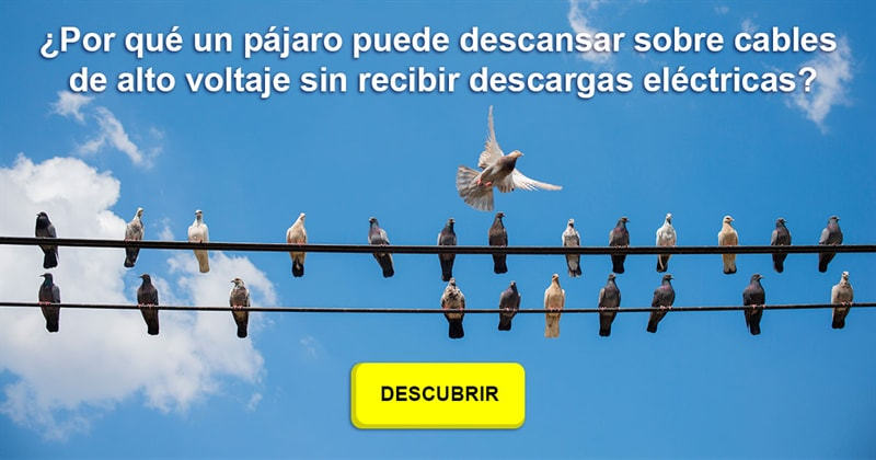 Divertido Historia: ¿Por qué un pájaro puede descansar sobre cables de alto voltaje sin recibir descargas eléctricas?