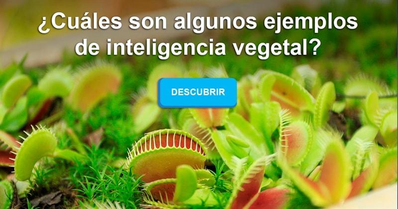 Naturaleza Historia: ¿Cuáles son algunos ejemplos de inteligencia vegetal?