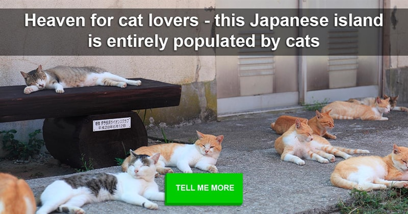 Nature Story: Heaven for cat lovers - this Japanese island is entirely populated by cats