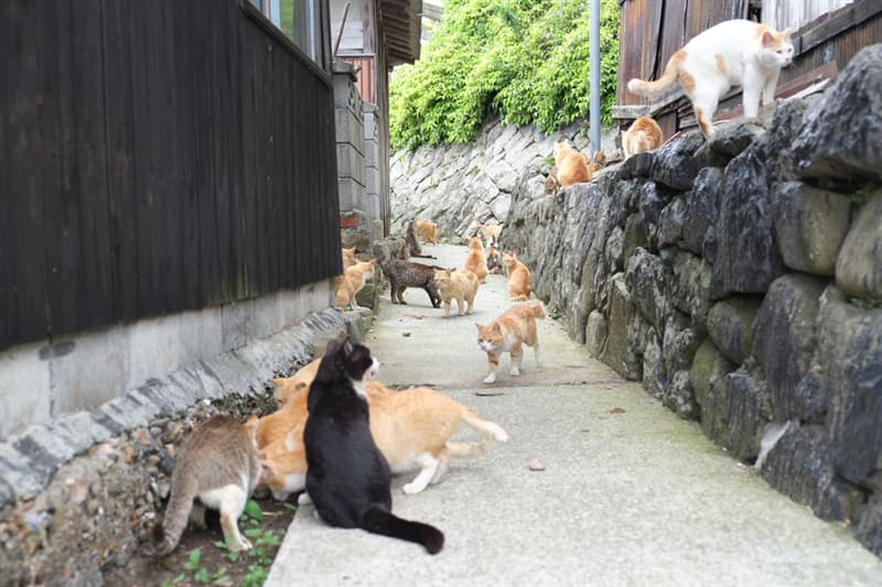 Nature Story: Aoshima, an island in Ehime Prefecture, is known for its large number of feline residents.