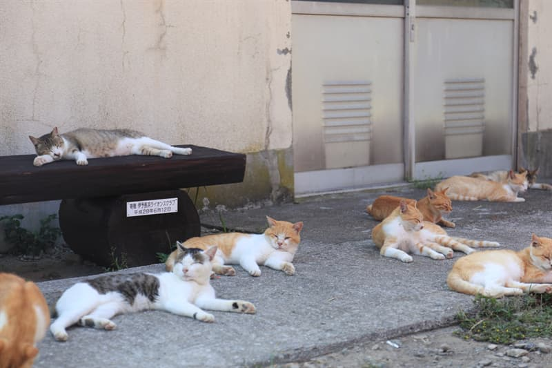 Nature Story: On Aoshima, cats outnumber people by a ratio of approximately 10:1!