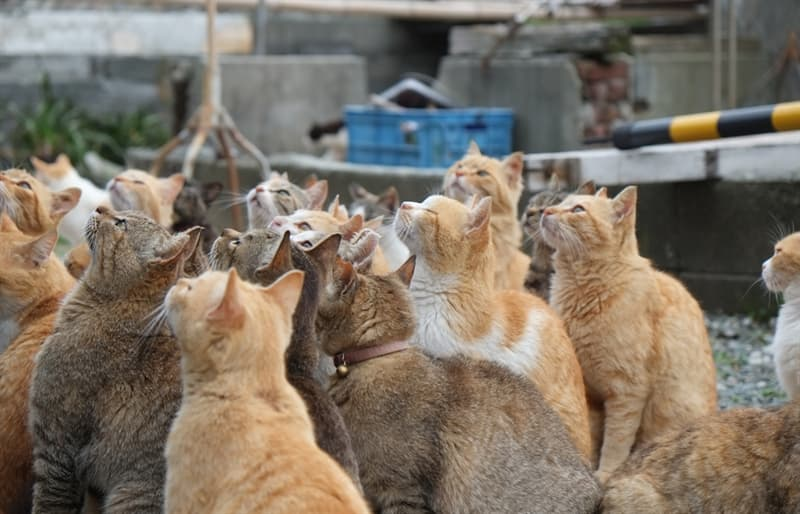 Nature Story: The felines stayed on the island and reproduced in large numbers.