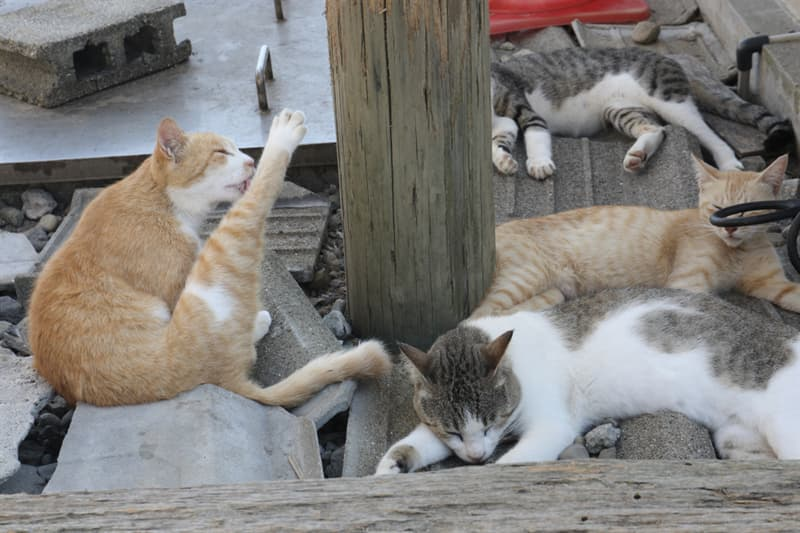 Nature Story: Only 13 people and about 130 cats live on the island now.