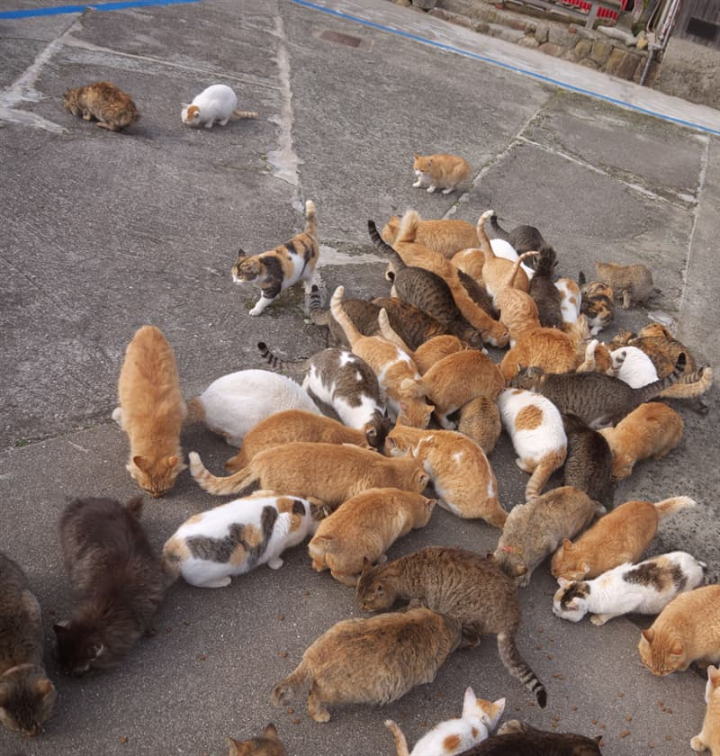 Nature Story: An average age of Aoshima's human residents is over 75, so it becomes really hard to take care of all the felines.