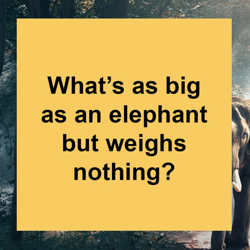 IQ Story: What's as big as an elephant but weighs nothing?