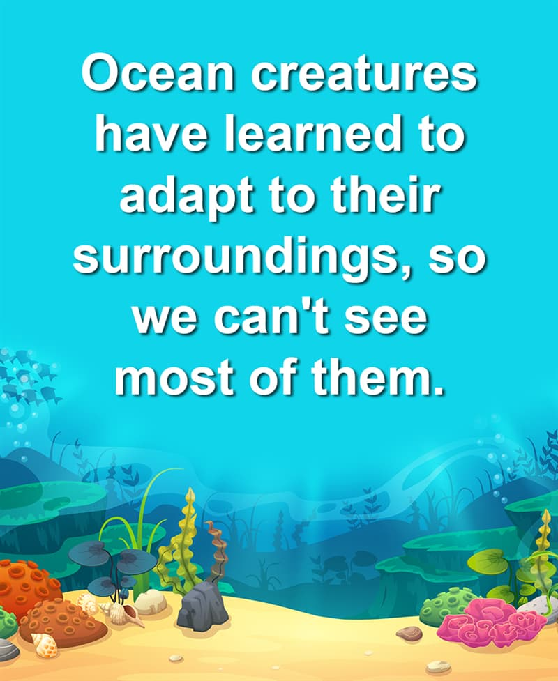 Geography Story: Ocean creatures have learned to adapt to their surroundings, so we can't see most of them