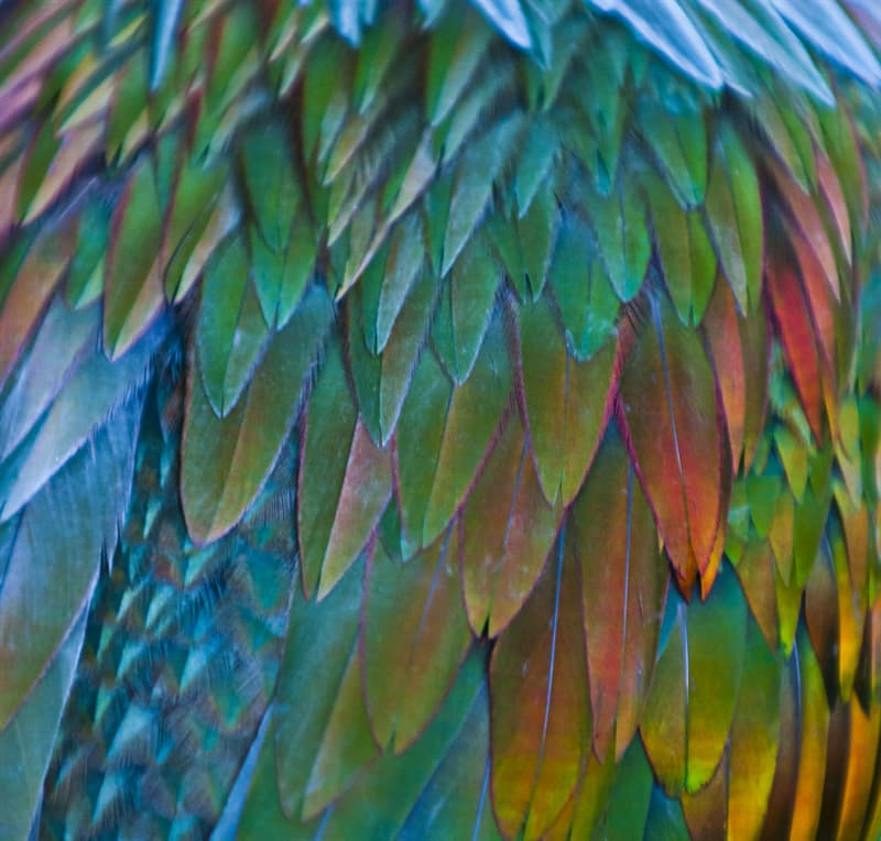 Nature Story: Masterpiece made by our nature - a bird with colorful feathers #2