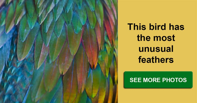 Nature Story: Masterpiece made by our nature - a bird with colorful feathers