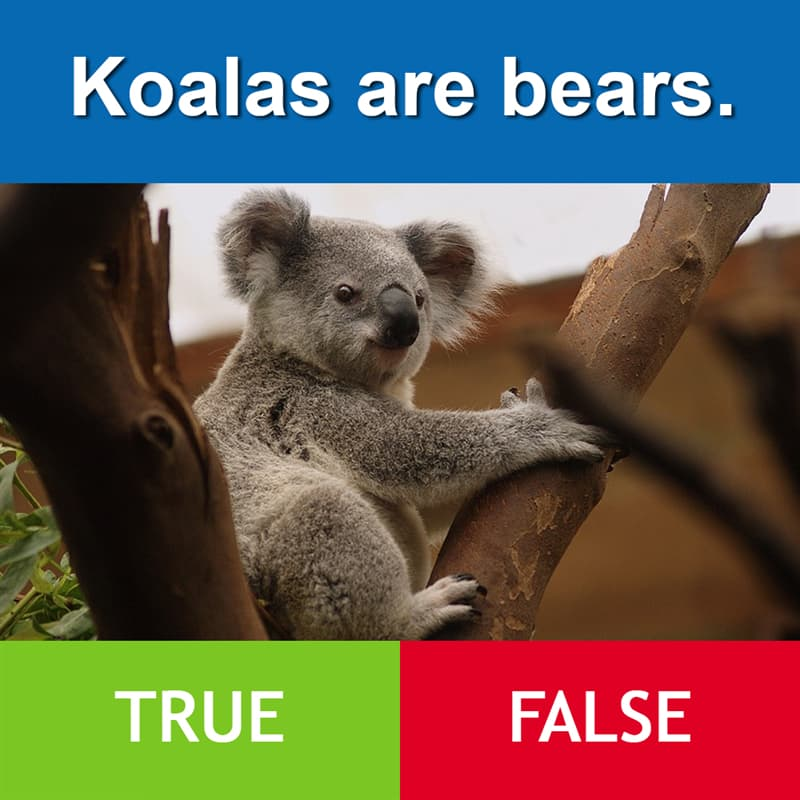 Culture Story: Koalas are bears.