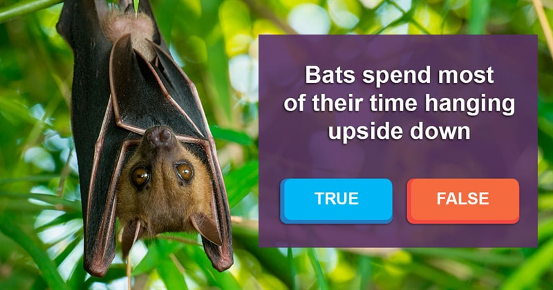 Nature Story: Why do bats roost upside down?