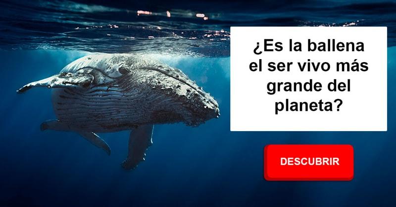 Naturaleza Historia: ¿Es la ballena el ser vivo más grande del planeta?