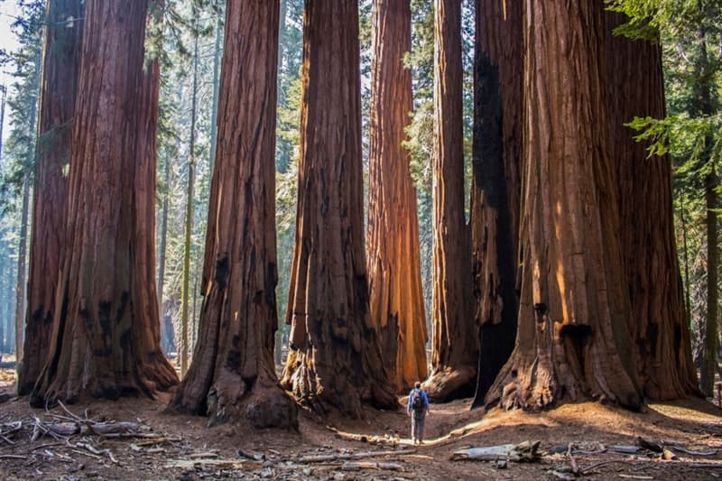 Geography Story: #6 Giant sequoias, California, USA