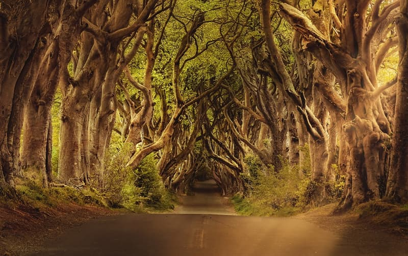 Geography Story: #9 Beech tree tunnel, Northern Ireland
