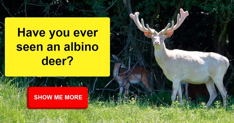 Nature Story: Awesome facts about nature and animals you never heard of