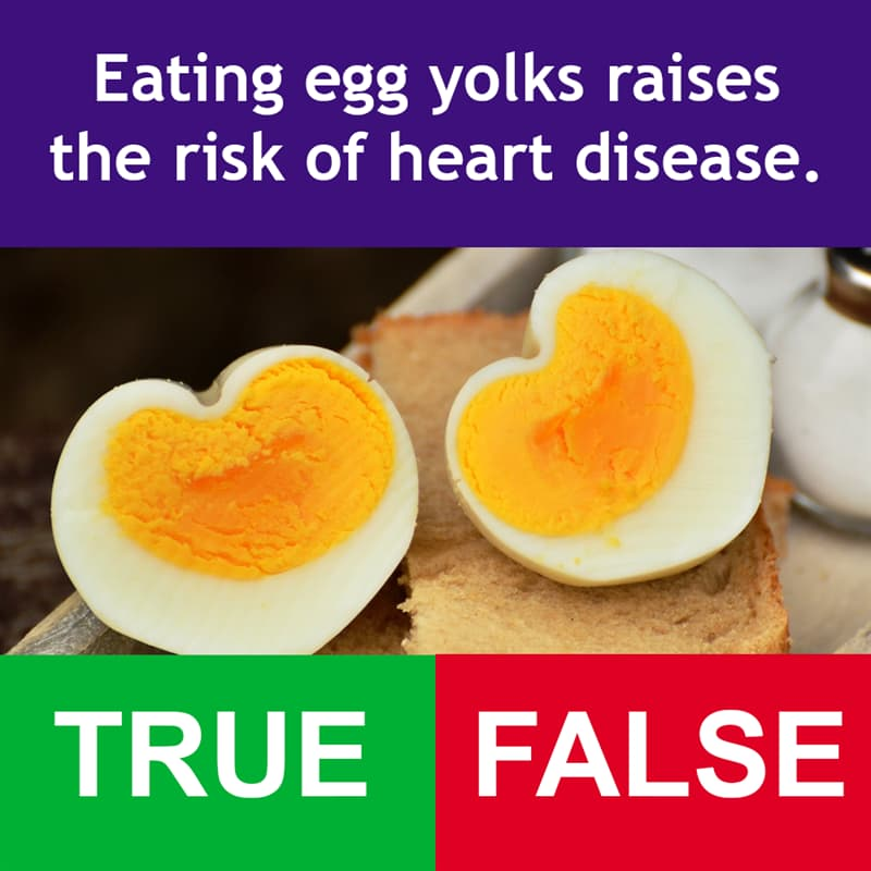 Science Story: Eating egg yolks raises the risk of heart disease.