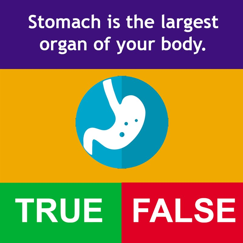 Science Story: Stomach is the largest organ of your body.
