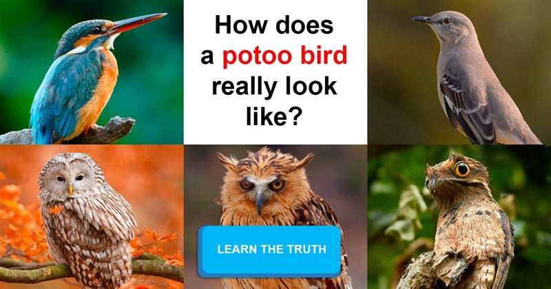 Nature Story: These weird yet cute birds definitely look like alien creatures