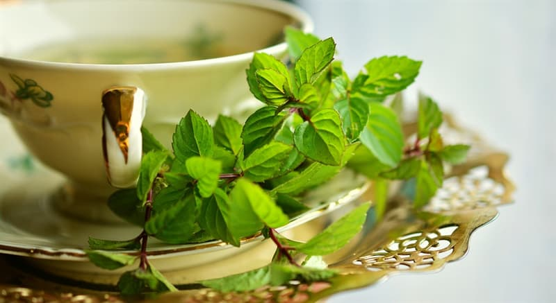 Science Story: #1 Peppermint Tea