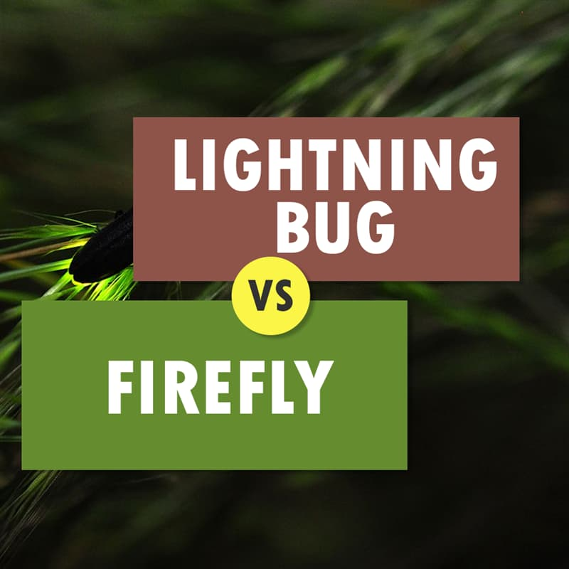 Geography Story: #11 Bugs that light up