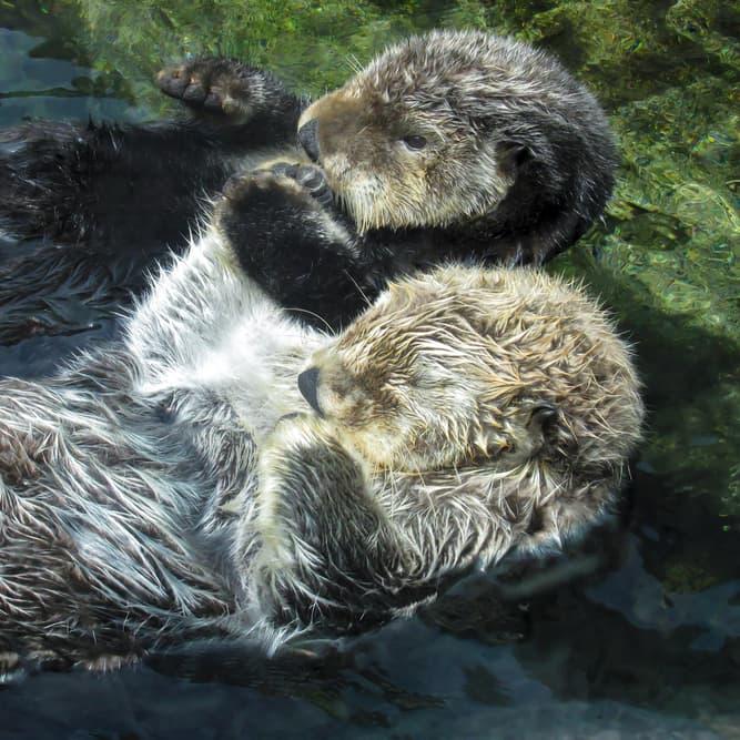 Nature Story: Bizarre sleeping habits of these 8 animals will amaze you