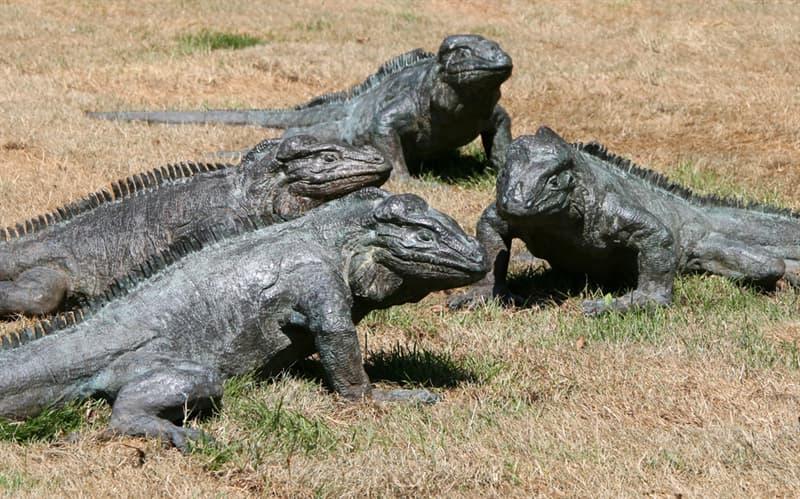 Geography Story: #12 Iguana Park, Amsterdam, The Netherlands