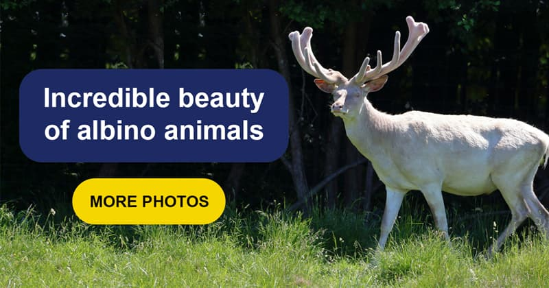 Nature Story: The unique beauty of these 14 albino animals will fascinate you
