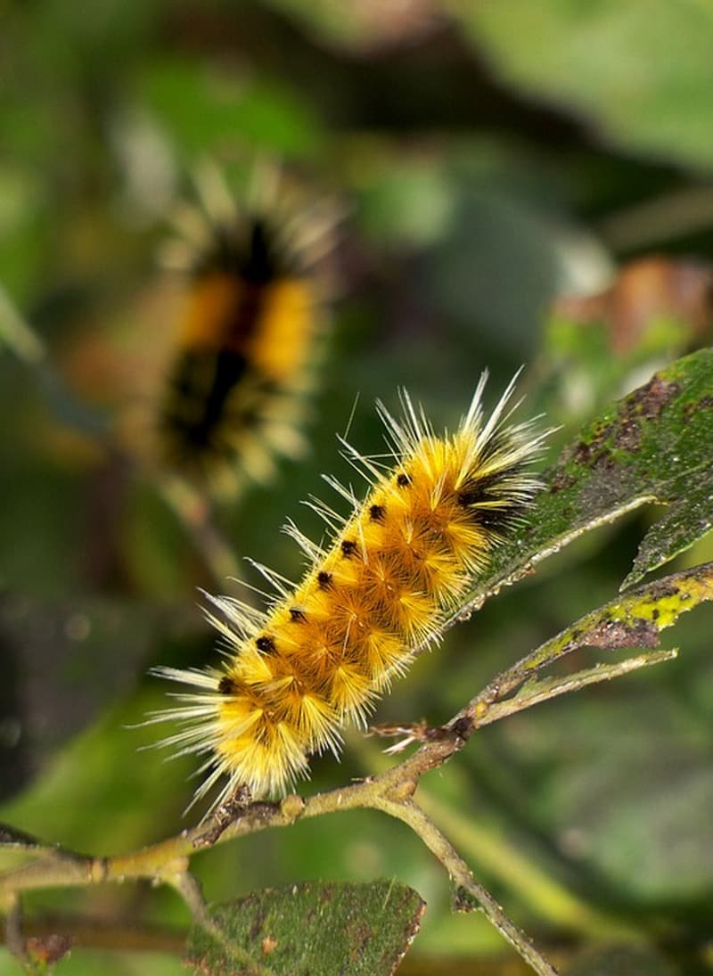 Nature Story: #3 Woollybear caterpillar