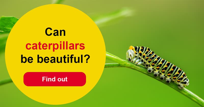 Nature Story: Weird beauty – 10 wonderful caterpillars and what they become