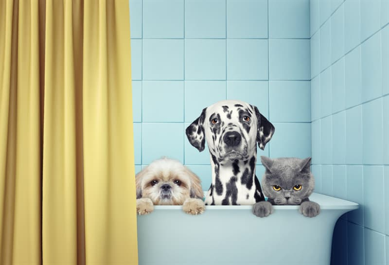 animals Story: #4 Bathe your pet on a weekly basis