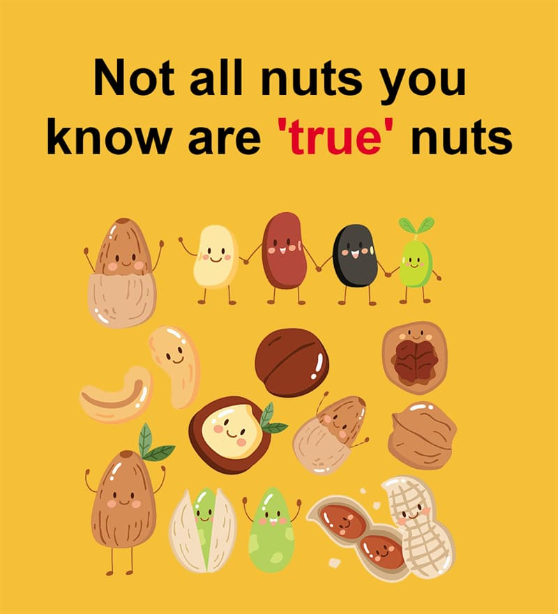 Nature Story: Not all nuts you know are 'true' nuts
