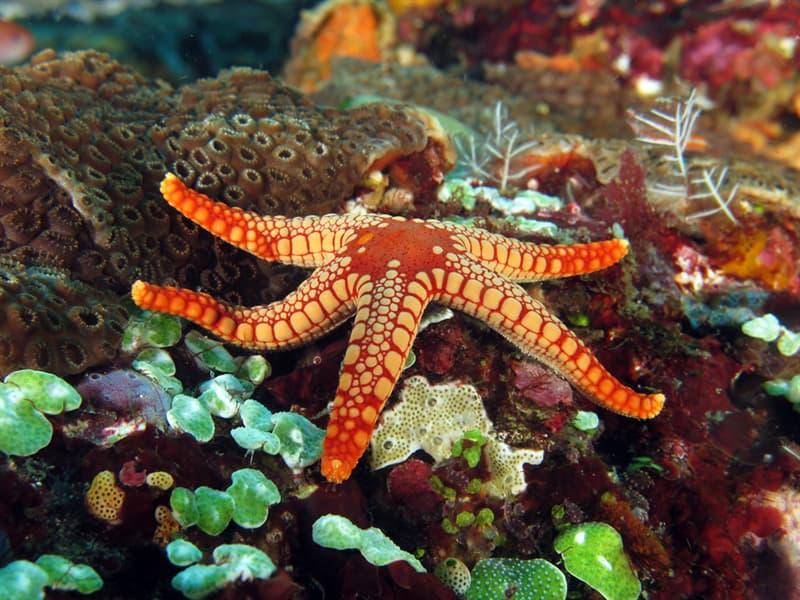 Nature Story: #2 Starfish