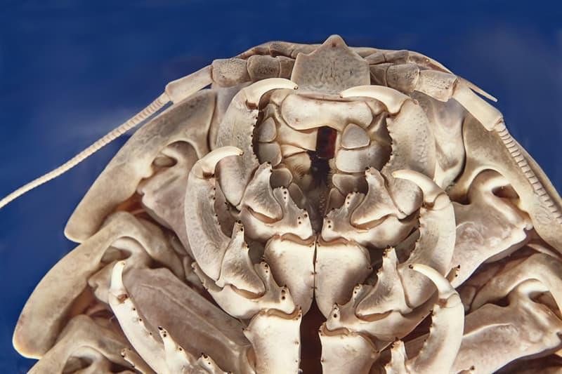 Nature Story: Deep ocean creatures - bizarre and terrifying