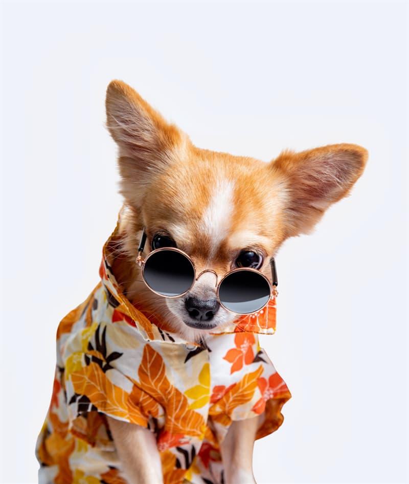 Nature Story: #8 Chihuahua