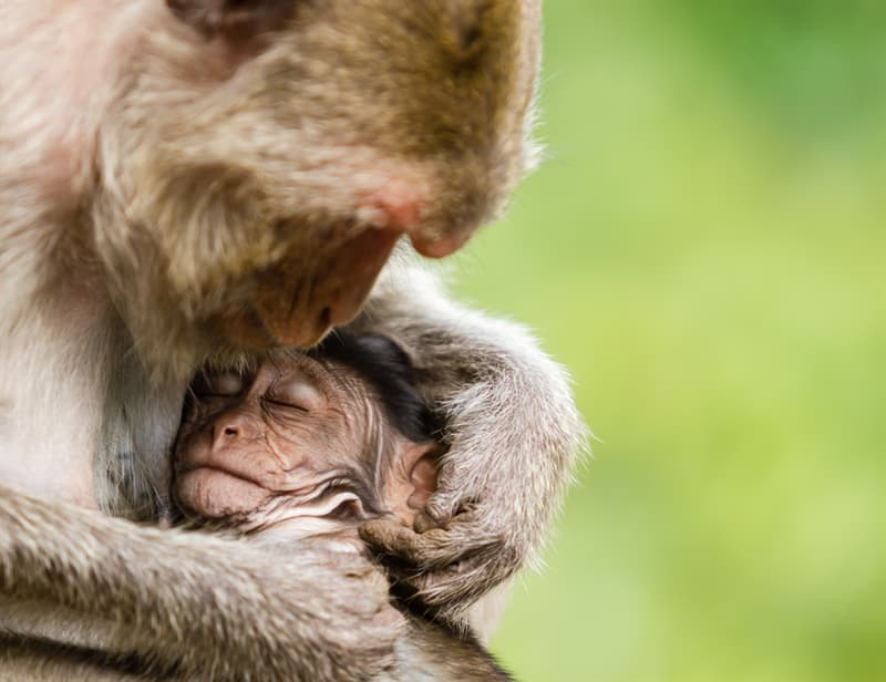 Nature Story: #2 Macaque
