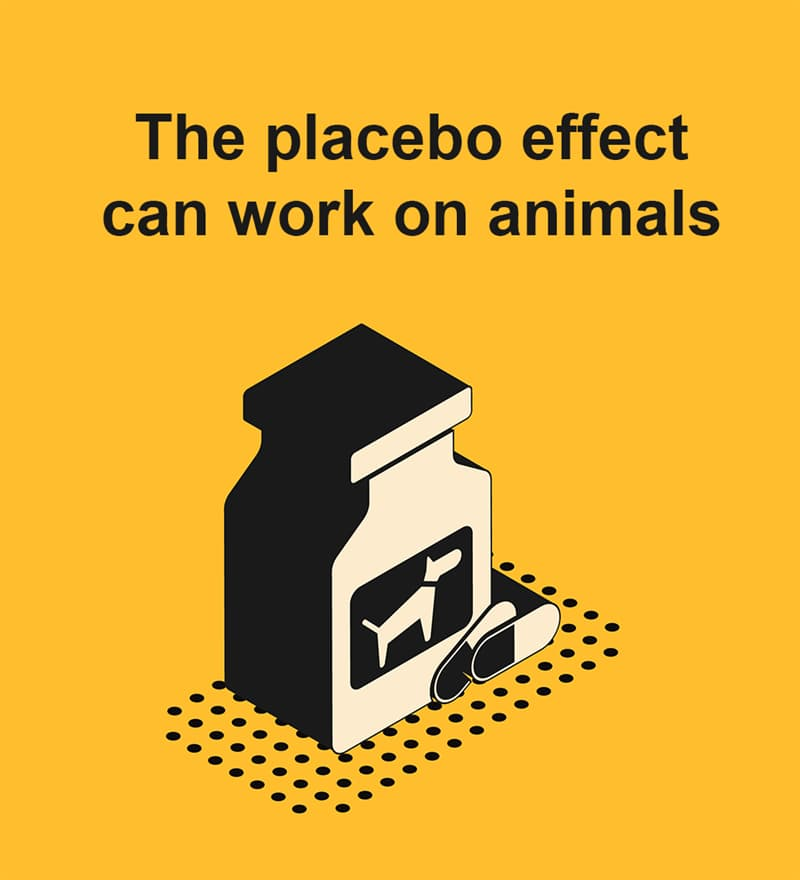 Science Story: Placebo can work on animals
