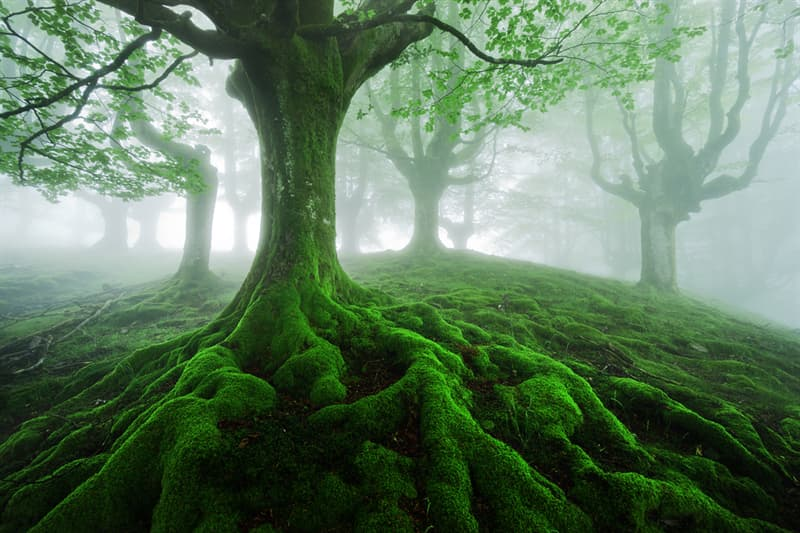 Geography Story: #7 Fairy Tale Tree