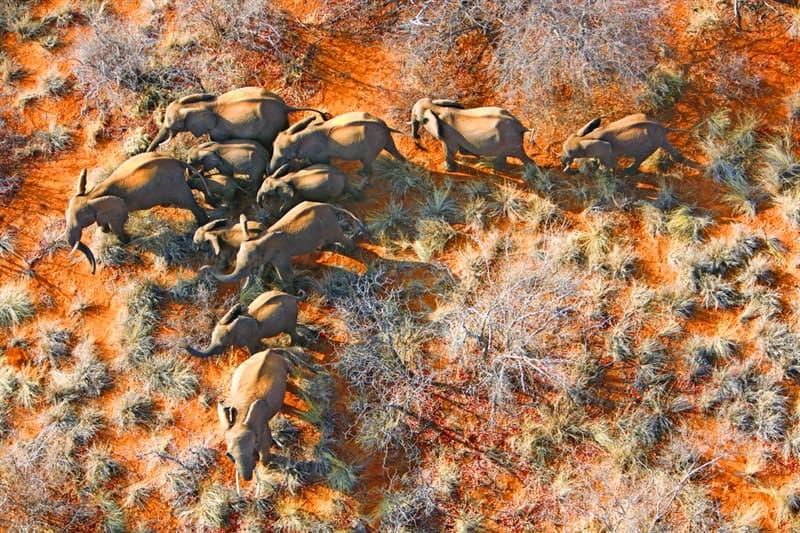Nature Story: #9 Elephant family