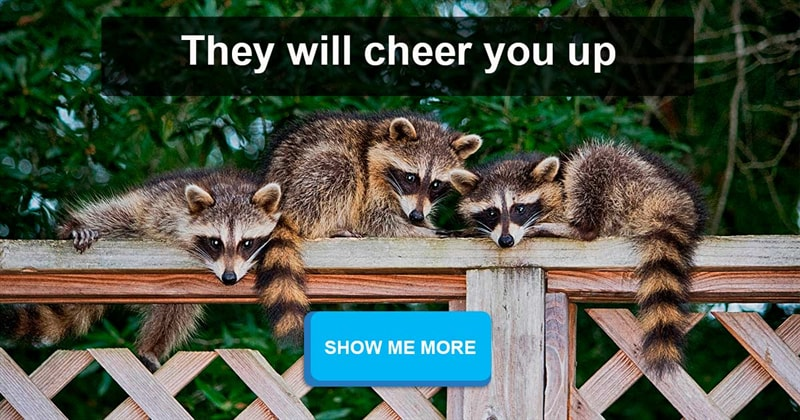 Nature Story: These raccoons will definitely fascinate you