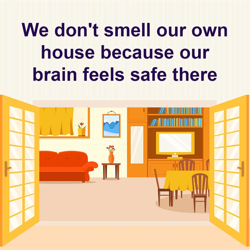 Science Story: We don't smell our own house because our brain feels safe in it