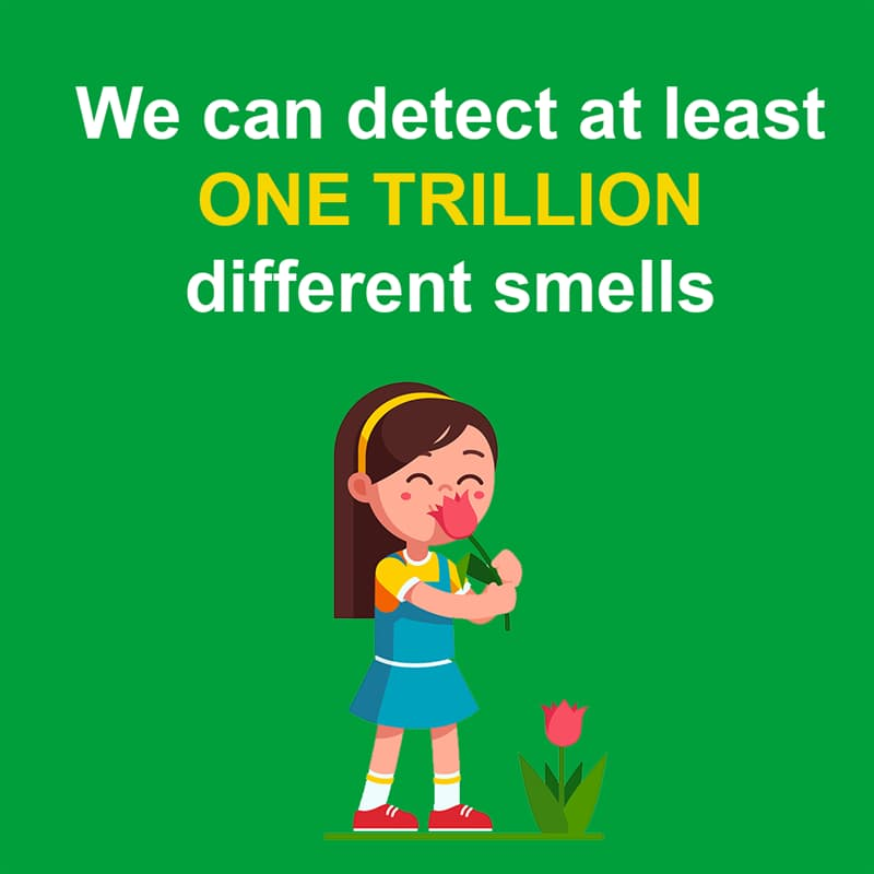 Science Story: We can detect at least one trillion different smells